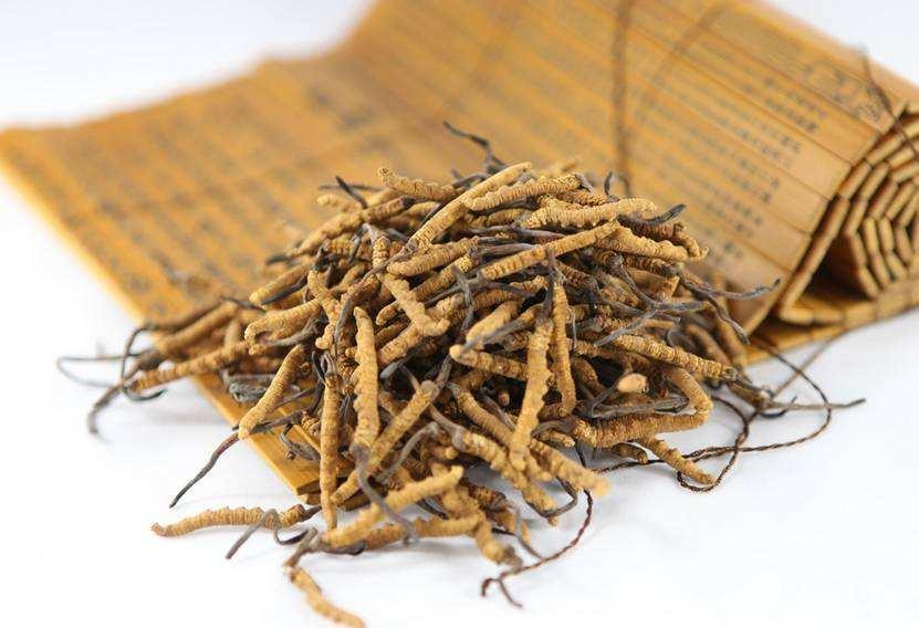 古今医学典籍关于冬虫夏草的功效作用与治疗病症的记载