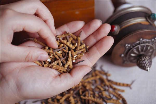 冬虫夏草该如何煮水喝简单又有效?
