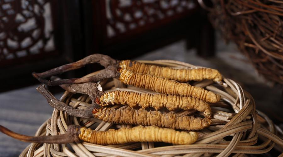 你知道哪些人群不能食用冬虫夏吗?